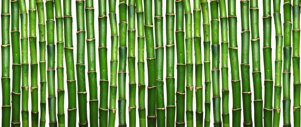 bamboo_texture